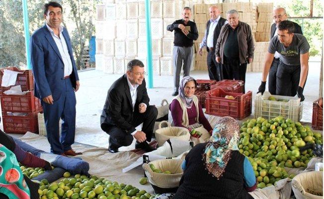 Başkan Turgut Narenciye İşçilerini Ziyaret Etti