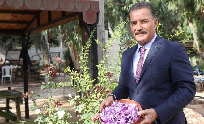 Dünyanın En Pahalı Bitkisi Mersin'de Yetiştirildi