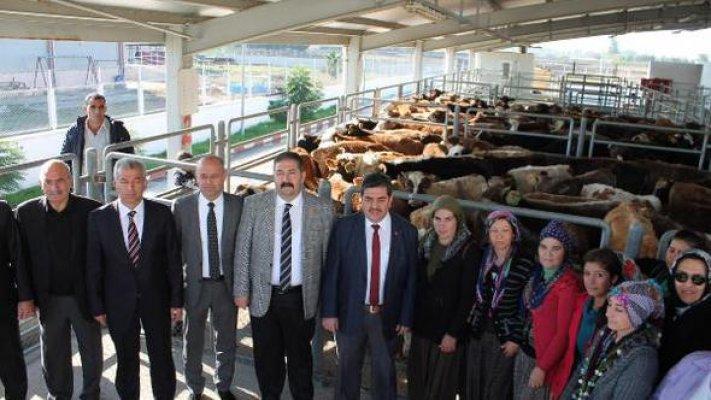 Tarsus'ta 19 Çiftçiye 114 Büyükbaş Hayvan Dağıtıldı
