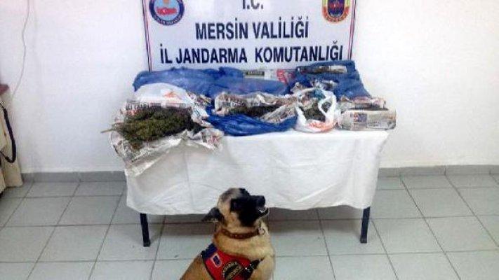Jandarma Esrar Satıcılarına Göz Açtırmadı