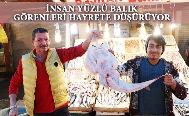 Mersin'de Bu Balığı Gören Şaşıp Kalıyor