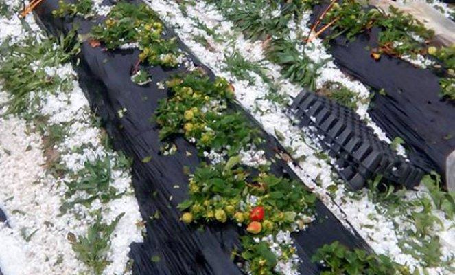 Silifke'de Dolu, Sera ve Bahçelere Zarar Verdi