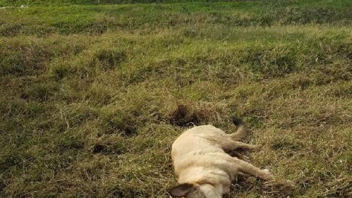 Sokak Köpeğini Öldürene 1255 Lira Para Cezası