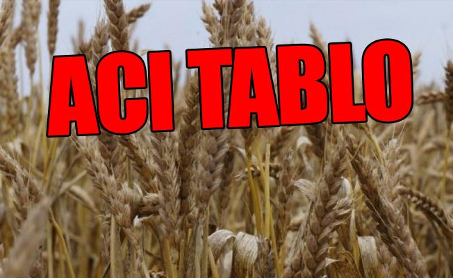 Artık Türkiye Tarım Ülkesi Değil