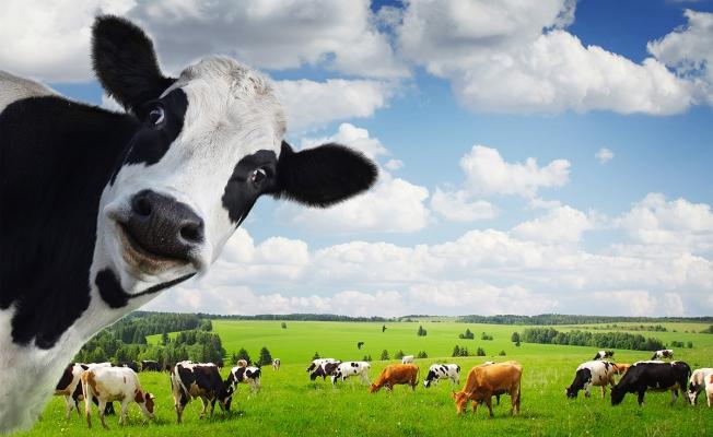 """""""Hayvancılık Alanları Yok Ediliyor"""""""