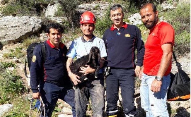 Kayalarda Sıkışan Yavru Keçiyi İtfaiye Ekipleri Kurtardı