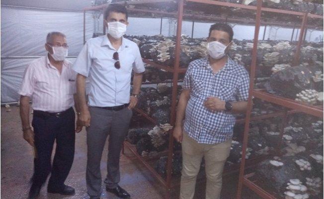 Gülnar'da Mantar Yetiştiriciliği Teşvik Ediliyor