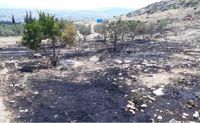 Mersin'de Zeytinlik ve Ormanlık Alanda Çıkan Yangın Korkuttu