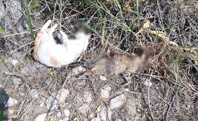 Mezitli'de Kedi Katliamı