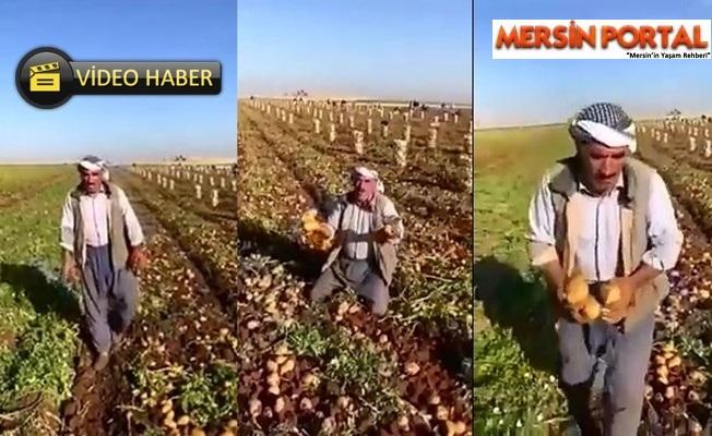 Patates Üreticisi Çiftçi İsyan Etti