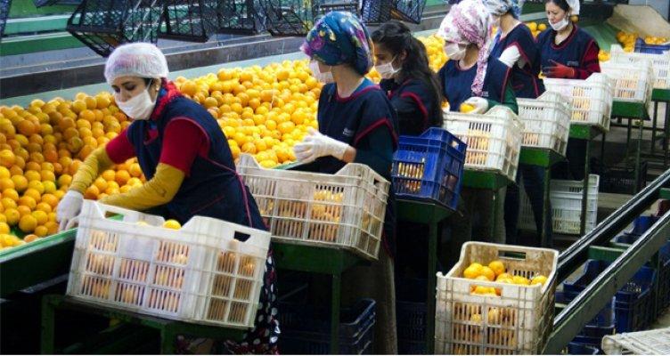 Türkiye'nin Yaş Meyve ve Sebze İhracatı 1,27 Milyar Dolara Yükseldi