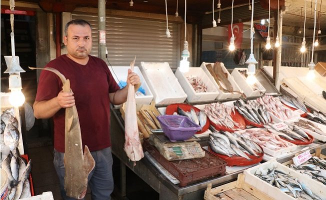Tezgahlar Balıkla Doldu Taştı, Fiyatlar Yarı Yarıya Düştü