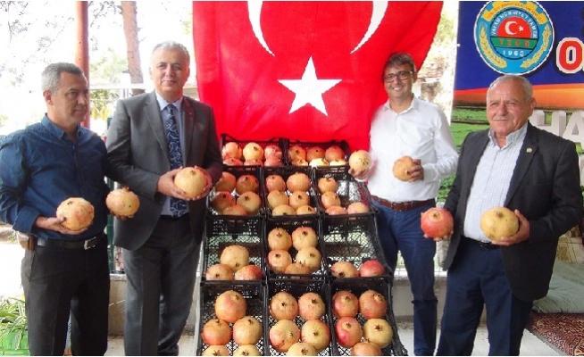 Mersin'de Tescilli Nar Hasadı Başladı