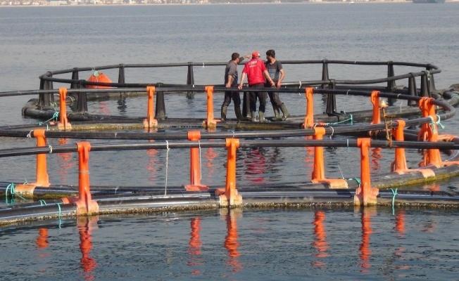Mersin Halkı Balık Çiftliği İstemiyor