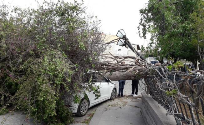 Tarsus'da Dolu ve Fırtına Zarar Bilançosu 15 Milyon TL
