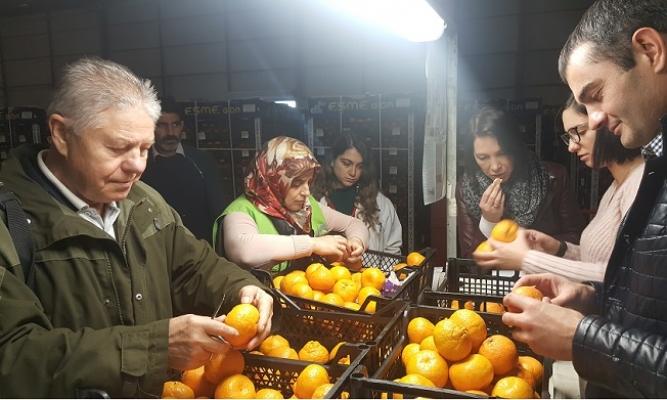 Rus veteriner Hekimlerinden Akdeniz Meyve Sineği İncelemesi
