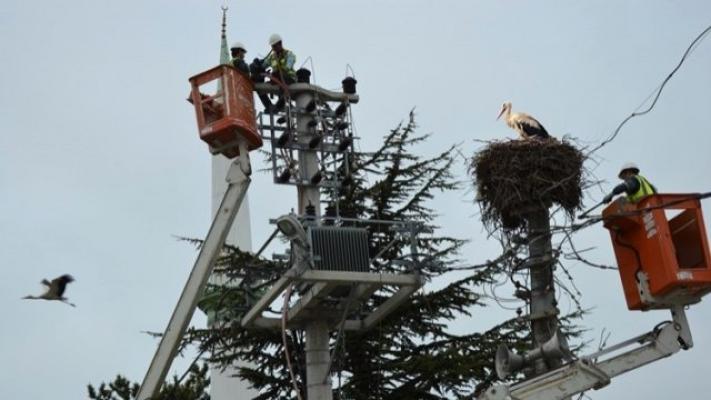 Yüksek Gerilim İzolasyonu ile Göçmen Kuşlar Zarar Görmeyecek