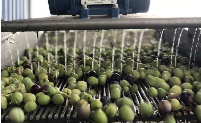 Zeytinyağı Fiyatı Dibe Vurdu, Fırsatçılara Gün Doğdu