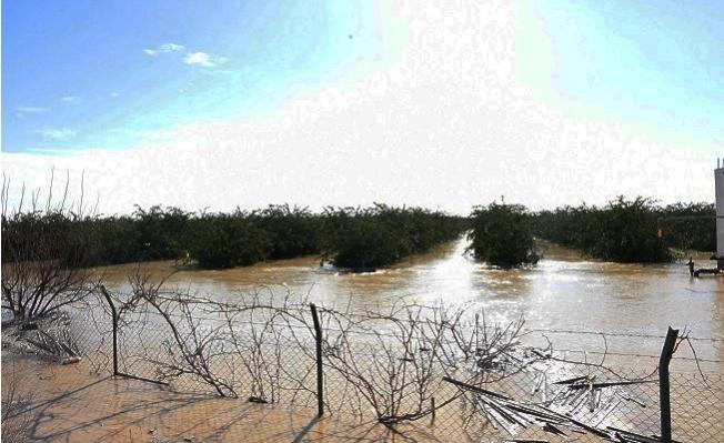 Mersin'de Yağışlar Ekili Alanlara Büyük Zarar Verdi