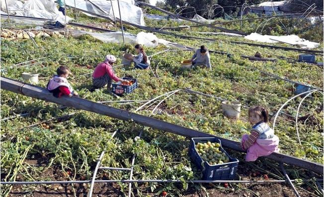 Mersinli Çiftçiler Hortum Afetini Sosyal Medyadan Paylaştı