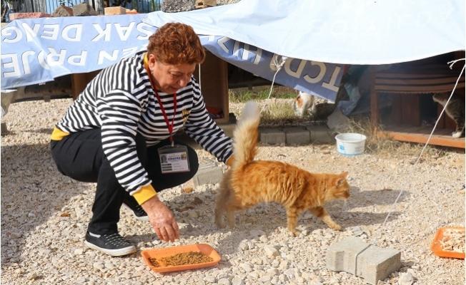 Sigarayı Bıraktı, 170 Kedinin Karnı Doydu
