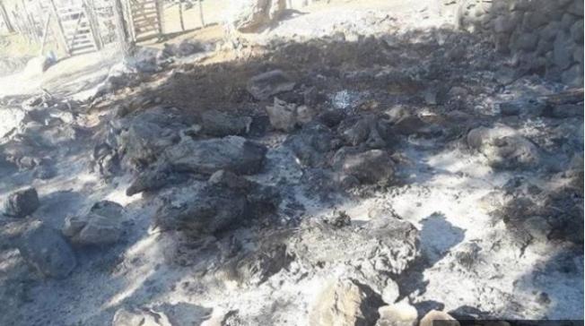Adana'da 100 Küçükbaş Hayvan Yanarak Telef Oldu