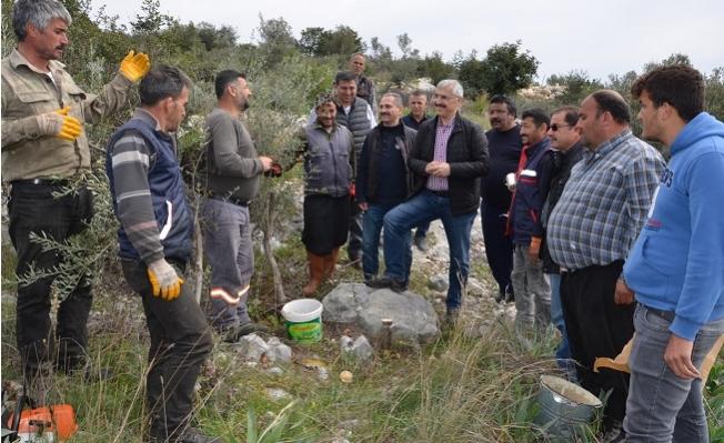 Mersin Orman Bölge Müdürlüğü'nün Hedefi, 30 Bin Delice Aşılamak