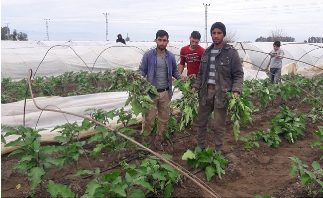 Tarsus'ta Hortum Seraları Vurdu