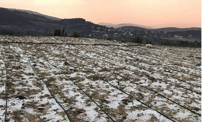 Erdemli'de Dolunun Zararı Yaklaşık 2,5 Milyon Lira