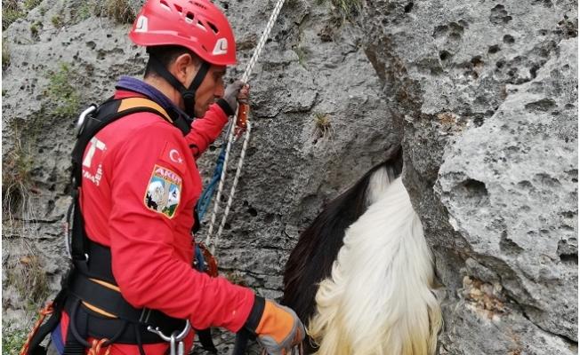 Yamaçta Mahsur Kalan Keçiler 5 Saat Süren Operasyonla Kurtarıldı