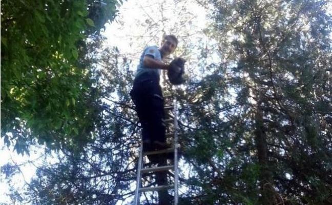 Ağaçta Mahsur Kalan Kediyi İtfaiye Ekipleri Kurtardı