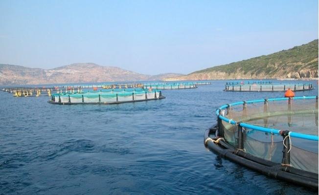 Mersin'e Kurulacak 19 Balık Çiftliği İle Deniz Katledilecek