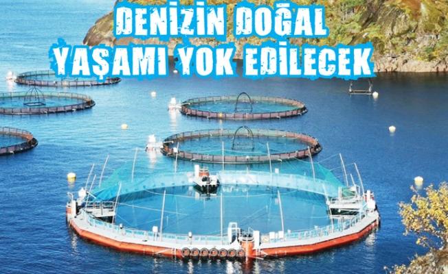 Mersin'in Denizi Balık Çiftlikleri İle Katlediliyor