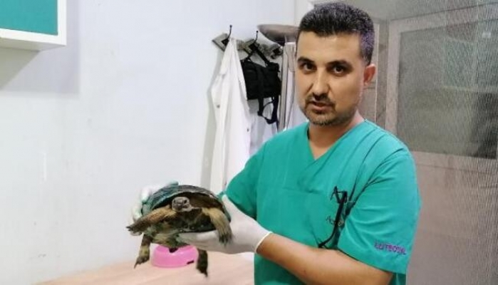 Veteriner Kapısına Bırakılan Yaralı Kaplumbağa Hayata Tutundu