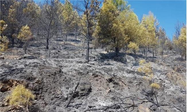Anamur'da Orman Yangını Panik Yarattı