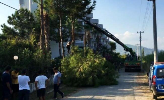 Sitedeki Ağaçların Kesimine Engel Olmak İsterken Fenalaştı