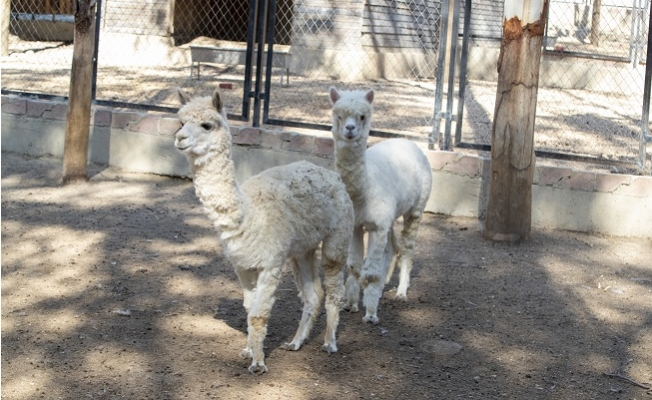 Tarsus Hayvan Parkı'nın Tür Çeşitliliği Artıyor