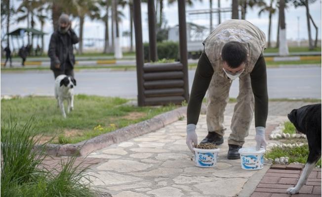 Büyükşehir Sokak Hayvanlarını Unutmuyor
