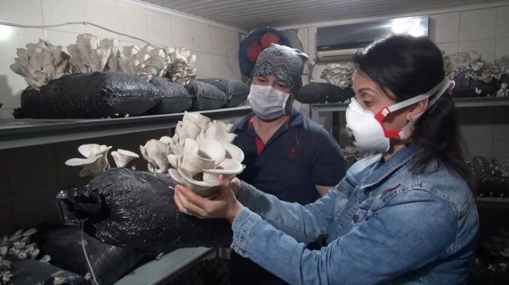 Tarsus Belediyesi İstiridye Mantarında Hasat Yaptı