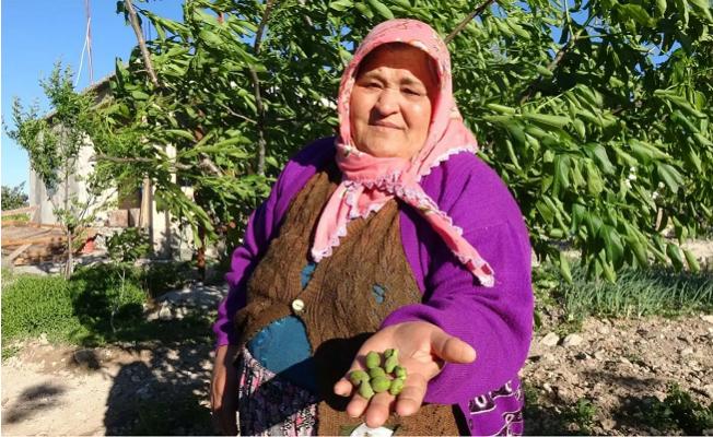 Mersin'de Kuvvetli Rüzgar; Bahçeler ve Bağlar Zarar Gördü