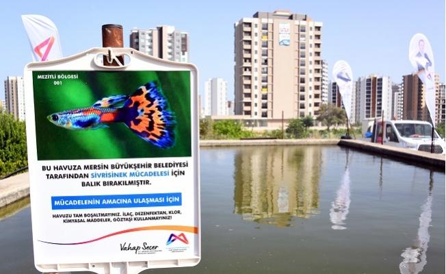 Mersin'de Sinekle Mücadelede Biyolojik Yöntem Başlıyor