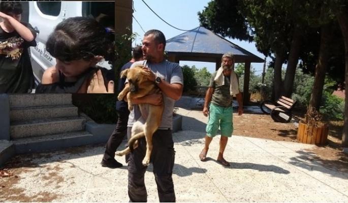 Çocuklar, Zehirlenerek Öldürülen 8 Köpekler İçin Gözyaşı Döktü