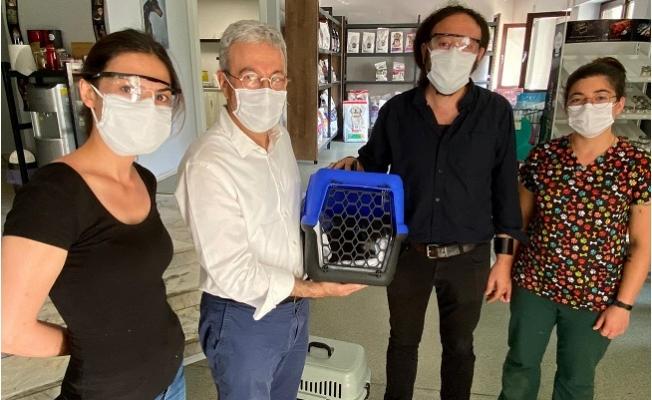 Mersin Milletvekili Alpay Antmen, Aracını Hayvan Ambulansı Yaptı
