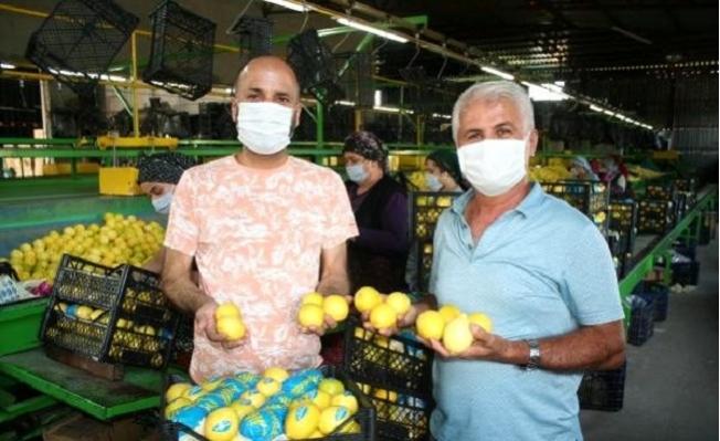'Limon, Bu Yıl Altın Dönemini Yaşayacak'