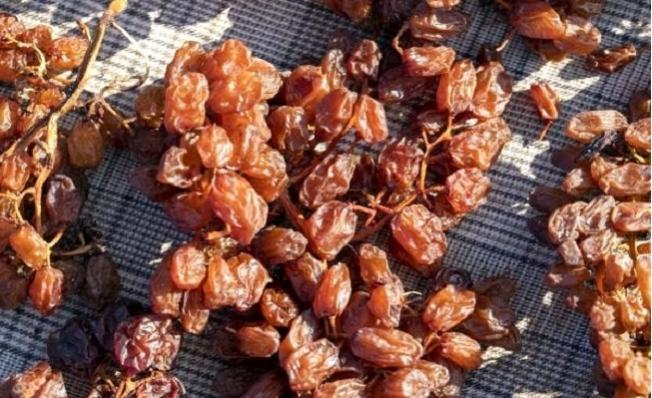 Gülnar'da Kurutmalık Üzümler, Meşe Külüne Bandırılıyor