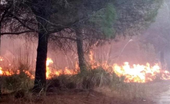 Tarsus'ta 2 Hektar Ormanlık Alan Yandı
