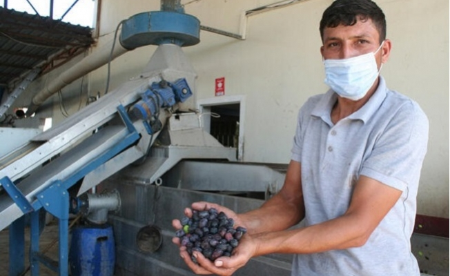 Zeytinin Rekoltesi Düştü, Yağının Fiyatları Arttı