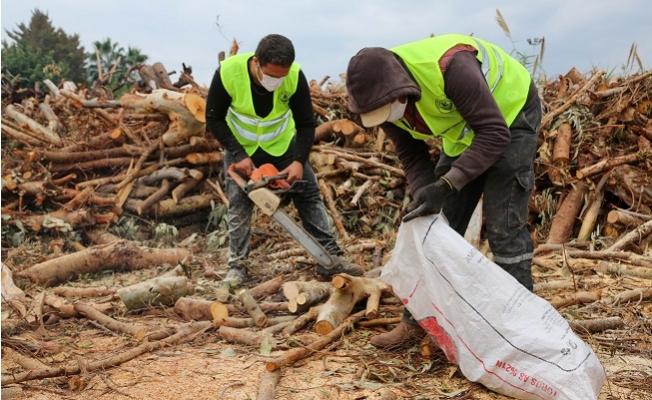Erdemli Belediyesi Budadığı Ağaçların Odunlarını İhtiyaç Sahiplerine Ulaştırıyor