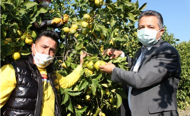 Meşhur Lamas Limonuna Coğrafi İşaret İçin Çalışma Başlatıldı