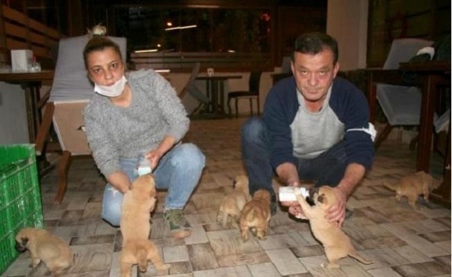Ölüme Terk Edilen Yavru Köpekleri Kurtardı